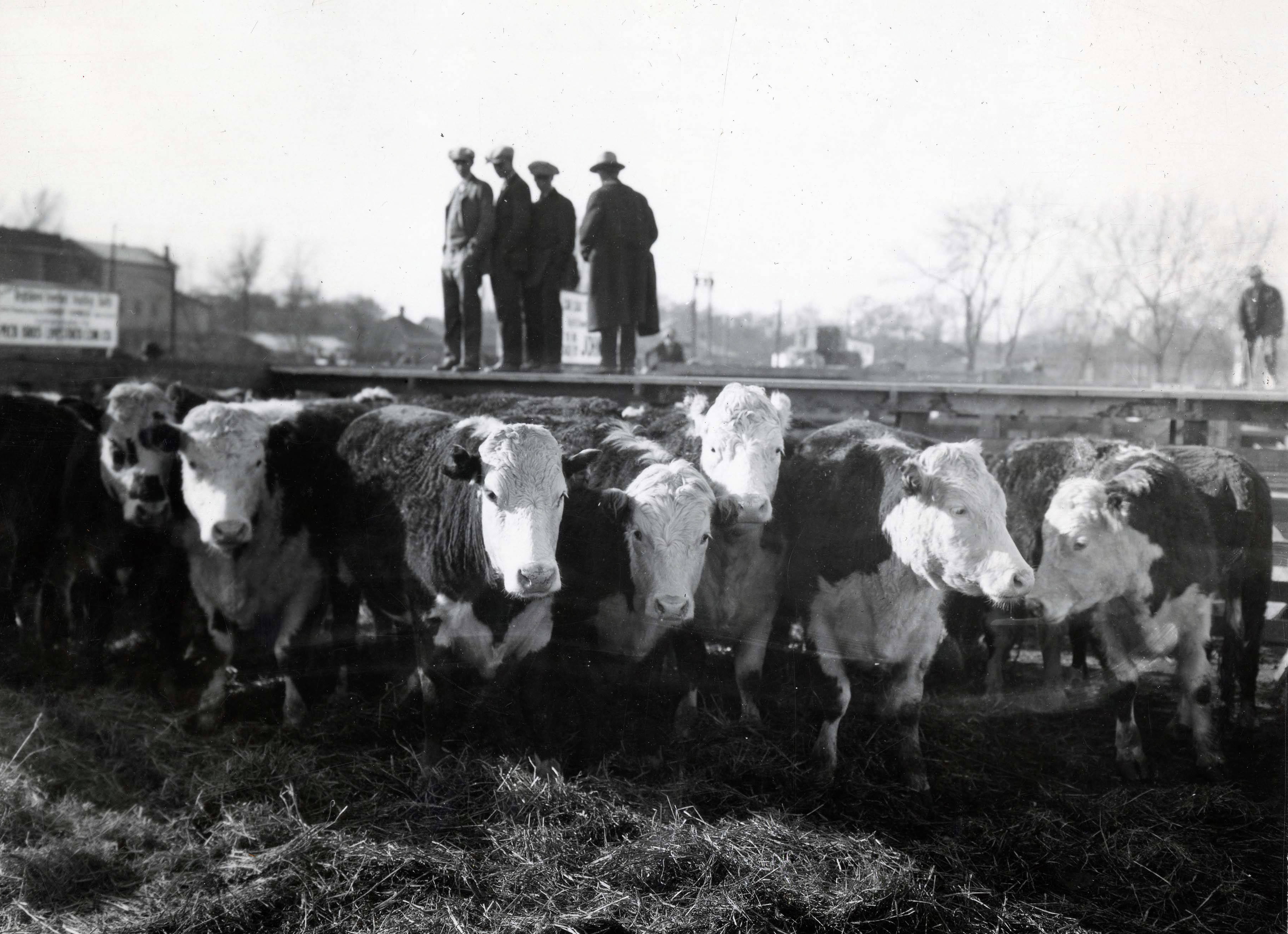 Ogden Stockyards Photographs, Memorabilia and Oral Histories